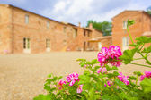 Flowers in the farm — Stock Photo