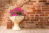 Petunia pot — Stock Photo
