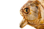 Piranha's head — Stock Photo