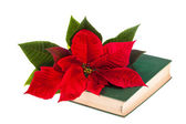 Poinsetta and book — Stock Photo