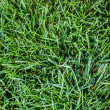 Intense grass — Foto Stock