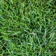 Intense grass — Stock Photo