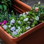 Planter — Stock Photo