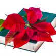 Poinsettia on book — Stock Photo
