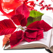 Poinsettia on bible — Stock Photo