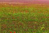 Deep red field — Stock Photo