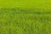 Üppige Grasvon Rot nach blau — Stockfoto