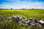 Stones in the country — Stock Photo
