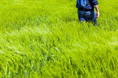 Strolling in the grass — Stock Photo