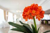 Svatební květina — Stock fotografie