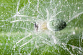Spider feeding — Stock Photo
