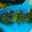 Turtles — Stock Photo #45001399