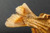 Fish tail — Stock Photo