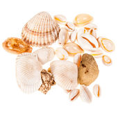 Different seashells — Stock Photo