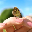 Stock Photo: Butterfly with rounds pattern on wings sitting on Womhand