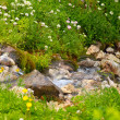 Clear Water Stream in mountains on green valley with flowers and stones Landscape — Stock Photo