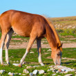 Stock Photo: Young Horse Farm Animal pastured on Green Valley eating fresh grass rural landscape