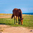 Stock Photo: Brown Horse Farm Animal pastured on Green Valley eating fresh grass rural landscape
