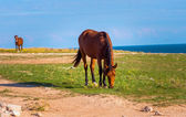 Brown Horse Farm Animal pastured on Green Valley eating fresh grass rural landscape — Stock Photo