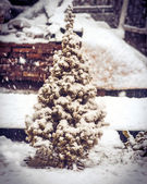 Little Fir Tree with Snow on branches and Snowflakes Winter symbol of New Year holiday — Foto de Stock