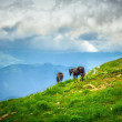 Horses on Green Valley in Mountains rural Landscape with moody sky clouds — Stock Photo #39425653