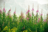 Flowers with Mountains on background beautiful nature — Stock Photo