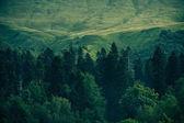 Coniferous deep Forest in Mountains Caucasus beautiful landscape — Stock Photo