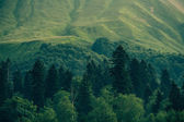 Coniferous deep Forest in Mountains Caucasus beautiful landscape — Stock Photo