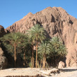 Palm trees on a background of mountains in Egypt — Stock Photo