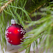 Christmas decoration with branches of spruce, pine and cedar with Christmas toys — Stock Photo #18258645