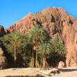 Stock Photo: Oasis in desert in Egypt