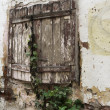 Old shuttered window with ivy — Stock Photo