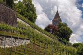 Vineyard in Rapperswil, Switzerland — Stock Photo