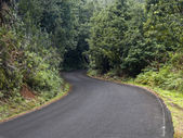 Pustej drodze w lesie — Zdjęcie stockowe