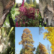 Trees collage — Stock Photo #14167140