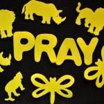 Pray — Stock Photo