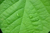 Leaf — Stock Photo