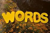 Slova — Stock fotografie