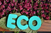 Word eco — Stock Photo