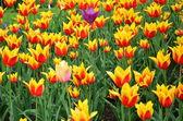 Yelow flowers — Stock Photo