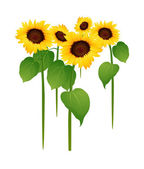 Vector icon sunflower — Stock Vector