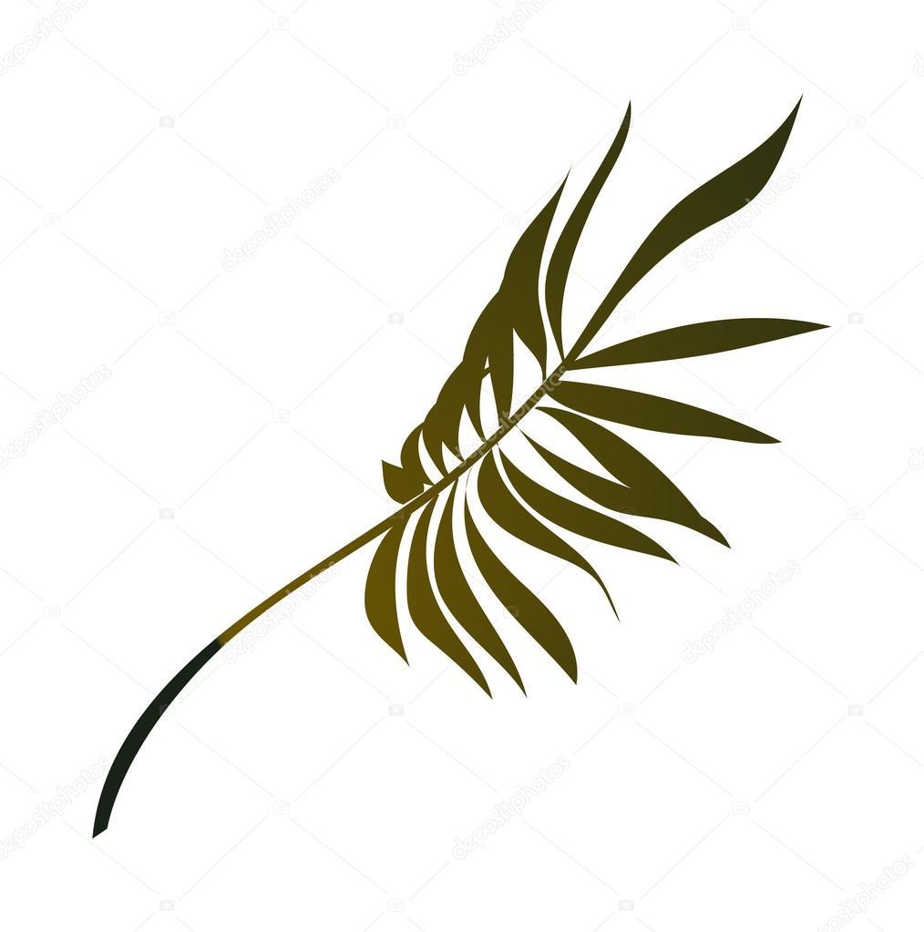 棕榈叶 — 图库矢量图像08