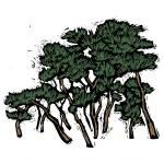 Needleleaf tree. — Stock Vector #13468304