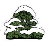 Needleleaf tree. — Stock Vector #13468346