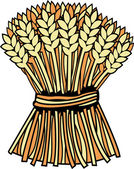 Sheaf of wheat — Stock Vector