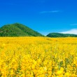 Landscape yellow meadow and mountain with blue sky — Stock Photo