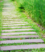 Wooden path walkway through the green grass — Stock Photo