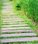 Wooden path walkway through the green grass — Stockfoto