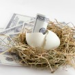 Stock Photo: Dollar bill banknote in nest egg