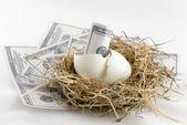 Dollar bill banknote in nest egg — Stock Photo